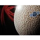 ★最高級クラウンマスクメロン(遠州) Lサイズ1個入り(1.4kg) 「メロンの王様」 【smtb-kd】 【10P01Oct16】◎