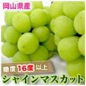 【発送は11/30まで】岡山産シャインマスカット 【晴王】3房〜5房(2kg)岡山県が栽培奨励している葡萄です