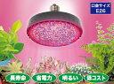 JEFCOMすくす〜くLEDランプ PSL160-E2601-RB