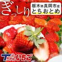 苺 いちご ぎっしり詰め500g x 1箱 /栃木県産 とち...
