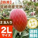 特秀 完熟 宮崎 マンゴー 贈答用2Lサイズ 2玉(700g以上) 送料無料 宮崎県産 人気 ギ