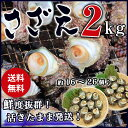 サザエ BBQ用 2kg(16〜26個) さざえ つぼ焼き 中サイズ 海鮮 魚介 バーベキュー / 送料無料 同梱不可 冷蔵配送 stp