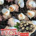 サザエ BBQ用 2kg(16~26個) さざえ つぼ焼き 中サイズ 海鮮 魚介 バーベキュー / 送料無料 同梱不可 冷蔵配送 お取り寄せグルメ 食品 備蓄 ギフト お中元