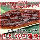 巨大 うなぎ蒲焼 中国産 1尾 / うなぎ ウナギ 鰻《※冷凍便》