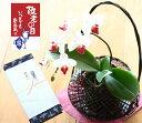 【送料無料 数量限定品】おめでたい紅白の胡蝶蘭&上質な手編み籠が人気です♪母の日1685人に...