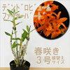 鉢植えの蘭のイメージ