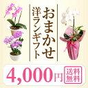 楽天年間ランキング連続受賞【洋蘭を破格でお届け】『洋蘭ギフト☆☆ 』おまかせ4000プレゼント 誕生日 お祝い 送料…