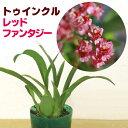 ジャパン フラワー セレクション トゥインクル ファンタジー