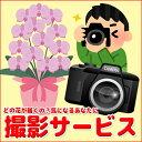 【ギフト洋蘭専用】写真サービス(画像1点)お届けする商品の写...
