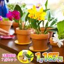 【初回購入限定】『洋ラン栽培お試しセット』花咲く苗 1187(イイハナ)セット 洋蘭苗の花芽付き株に初心者でも簡単に育てられる資材7点を付けた栽培キット