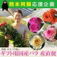 「熊本応援企画 阿蘇村上バラ園ギフト用国産バラ 産直10本セット」