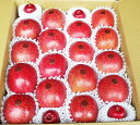 いよいよ収穫!!シャキシャキ美味しい! 盛岡の旬のりんご5キロ