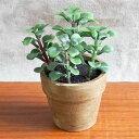 グリーンポット ミセバヤ 多肉植物/フェイクグリーン/インテリアグリーン/イミテーショングリーン/造花