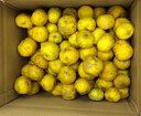 訳あり柚子10Kg【予約受付開始!】11月中旬~12月中旬出荷 高知県の柚子。栽培中農薬不使用。表面に傷やでこぼこがあり、色つきや大きさが揃っていないため訳あり価格でご提供いたします。