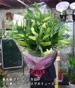 最高級大輪カサブランカ5本の花束。moriyaが自信を持ってお勧めする、白ユリの女王。本当のカサブラ