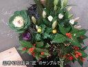 【送料無料】切花福袋(和風:匠)お正月限定、和風正統派の上質な国産切花セットです♪持ちが違う切り花を是非お試しください!