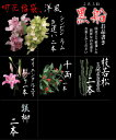 切花福袋(洋風:黒船)お正月限定、蘭が入る上質な切花セットで...