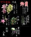 切花福袋(洋風:飾蘭)お正月限定、蘭が入る上質な切花セットです♪持ちが違う切り花を是非お試しください!