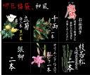 切花福袋(和風:鷹)お正月限定、和風正統派の上質な切花セットです♪持ちが違う切り花を是非お試しください!