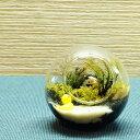 【現品】8cm ボトルテラリウム 苔テラリウム 完成品 現物 苔盆景 テラリウム アヒルとウマのいる風景