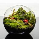 ショッピングテラリウム 8cm ガラスボトルテラリウム 苔テラリウム 完成品テントウムシが休む木 苔盆景 テラリウム 流木