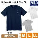 POLO ポロ クルーネックTシャツ 綿100% グンゼ G...