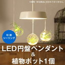 ショッピングペンダントライト 〈MotoM〉円盤ペンダント & 植物ポット/引掛シーリング
