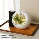 ショッピングイルミネーション 灯菜照明 木製LEDライトと磁器の花器 Akarina-L12 ダークブラウン MAI12DB