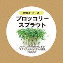 灯菜Akarina ブロッコリースプラウトの種 水耕栽培3点セット[液体肥料・スポンジ30個]mas12