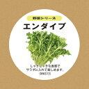 ショッピングプランター 【エンダイブの種 タネ たね 水耕栽培3点セット】mas13