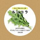 ショッピングプランター 灯菜Akarina ルッコラ水耕栽培種子セット ルッコラたね約20粒 液体肥料50ml 水耕栽培用スポンジ30個 mas08