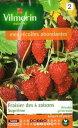 VILMORIN社-フランス野菜の種【イチゴ】四季なりイチゴ・Supremeストロベリー【V-strawberry1】