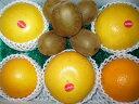 太陽をいっぱいあびたビタミンCたっぷりのヘルシーな詰め合わせオレンジ、グレープフルーツ&キ... ...