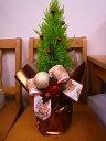 Xmasツリー(ゴールドクレスト) 【クリスマスツリー】お届けは 12/24(土)まで 【RCP】【yo-ko1214】【楽ギフ_包装】【楽ギフ_メッセ入力】
