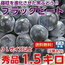 【送料無料】冷蔵便だから鮮度そのまま!藤稔を進化させた超大粒ブドウ!期待の新品種