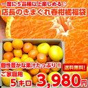 【送料無料】【訳あり】個性豊かな果汁たっぷり♪5種類以上の柑橘が楽しめる店長のきま