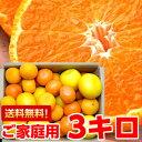 個性豊かな果汁たっぷり♪5種類以上の柑橘が楽しめる店長のきまぐれ春の柑橘福袋3kg北海道800円・沖縄・一部離島1,000円
