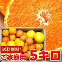 個性豊かな果汁たっぷり♪5種類以上の柑橘が楽しめる店長のきまぐれ春の柑橘福袋 たっぷり5kg北海道800円・沖縄・一部離島1,000円
