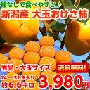 【送料無料】【秀品】種なしだからとっても食べやすい♪新潟産 大玉おけさ柿 たっぷり約6.6kg【北海道、沖縄、一部離島は別途300円】