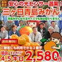 今シーズン最後の大奉仕価格!【送料無料】【みかん】【数量限定...