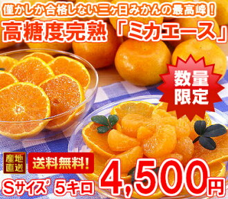 Maximum of three months, luxury brands high Brix ripe three months, Mikan 'Michaels' S size lots of 5 kg (Hokkaido, Okinawa and remote islands are 300 yen)