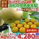 【送料無料】【光センサー選果】たっぷり食べれる箱買い♪地元浜松の完熟幸水梨 たっぷり秀品 約5kg【