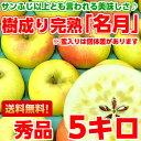送料無料 ぐんま名月 りんご フルーツギフトサンふじ以上とも言われる美味しさ♪樹成り完熟ぐんま名月5