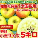 送料無料 ぐんま名月 りんご フルーツギフトスポット入荷!小玉サイズだからお買い得♪樹成り完熟ぐんま