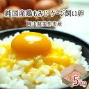 ケージ飼い卵 5kg(約80個) 純国産鶏 もみじ 岡山県美作市産 天真卵まん 赤玉 非遺伝子組換飼料 送料無料
