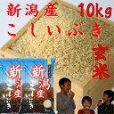 新潟産こしいぶき10kg【玄米】5kg×2個【29年産 1等...