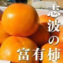 【ブランド柿】福岡県産志波柿 冷蔵柿 2...