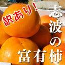 訳あり!柿 福岡県産志波柿 冷蔵柿 M〜2L混合 約14個 【富有柿】【ご家庭用】