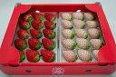 白いちご「パールホワイト」&赤いちご「さがほのか」食べくらべセット イチゴ 苺 ギフト 産地直送 佐賀県産