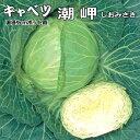 潮岬(しおみさき)・キャベツ苗タキイ交配 5ポットセット
